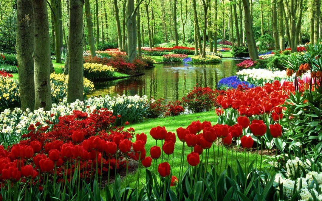 Jak duży ogród ?