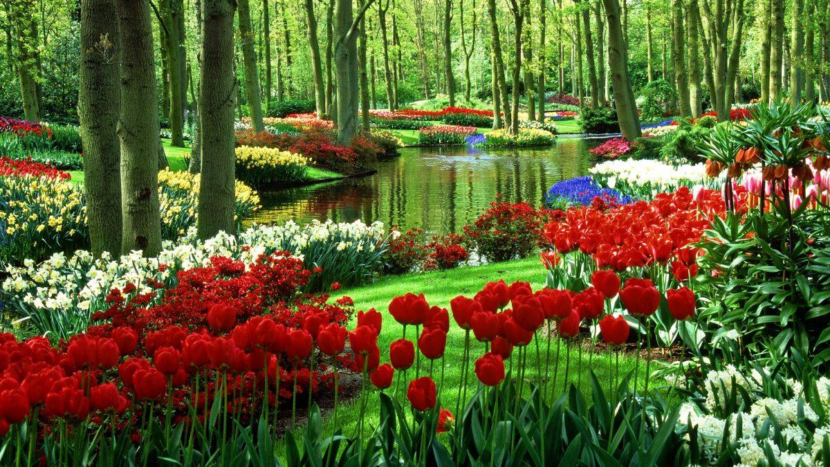 Jak duży ogród